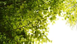 leaves-swaying